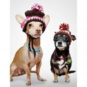 Μπλούζες & Φορέματα Σκύλου