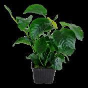 Ζωντανά Φυτά